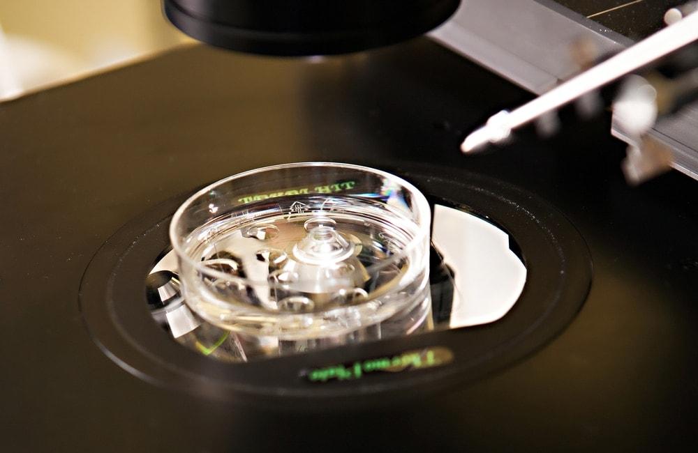 Trứng thụ tinh với tinh trùng trong một đĩa petri tạo thành phôi